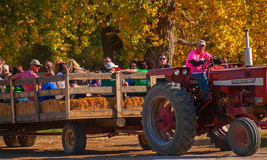 Farmstead near Boise has one of the top 10 corn mazes in the U.S.