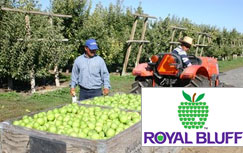Learn how Royal Bluff Orchard saves $35k a year with a simple time clock app